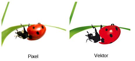 Vektoren und Pixel